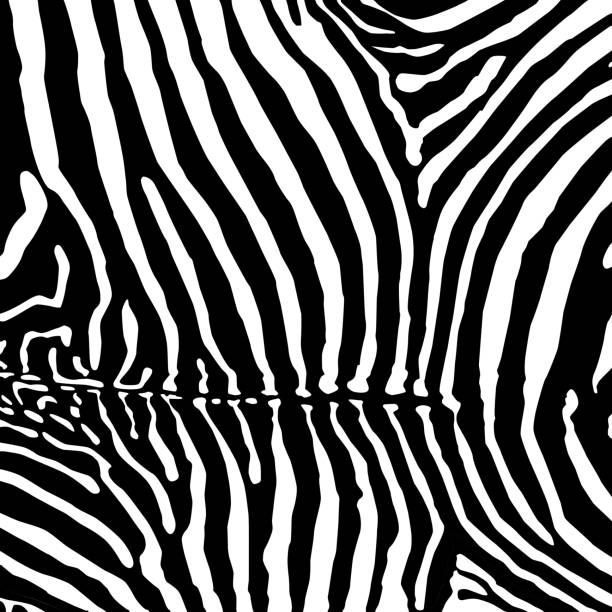 ilustrações de stock, clip art, desenhos animados e ícones de vector. zebra fundo. - padrões zebra