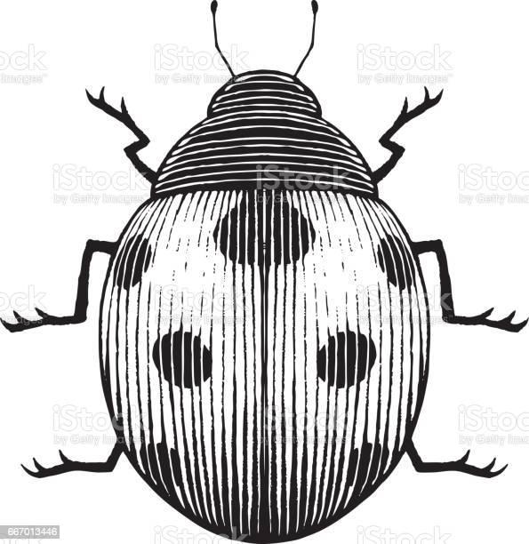 Vectorized ink sketch of a ladybug vector id667013446?b=1&k=6&m=667013446&s=612x612&h=kev whqzfo4 kyfs1trx8p tmfyuzywji wipezhmxu=