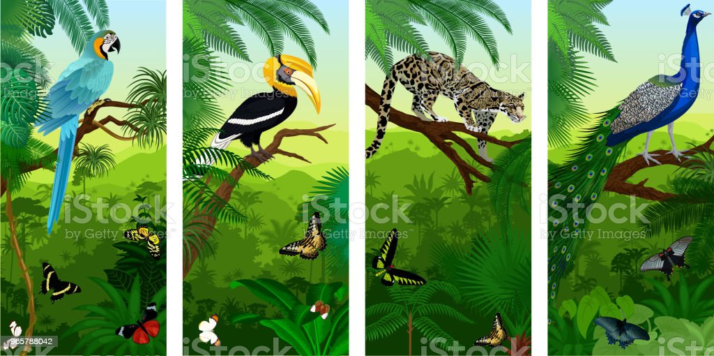 Vectorset of jungle rainforest vertical baners with clouded leopard, peacoock, blue ara, great hornbill and butterflies - Royalty-free Animal stock vector