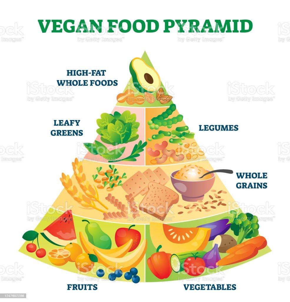 Vegan Food Pyramid Vector Illustration Healthy Vegetarian Eating Scheme Stock Illustration Download Image Now Istock