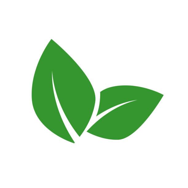 ilustraciones, imágenes clip art, dibujos animados e iconos de stock de concepto de etiqueta de vector de comida vegana. hoja verde aislada en el suelo blanco. - vegana