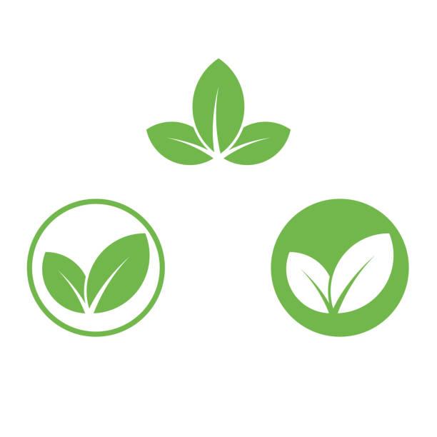 ilustraciones, imágenes clip art, dibujos animados e iconos de stock de icono vegano plantilla de etiqueta de hoja verde para el diseño de paquetes de alimentos veganos o vegetarianos. icono de hoja verde aislado para la bio nutrición vegetariana y dieta saludable o los símbolos del menú de restaurante vegano conjunto - vegana