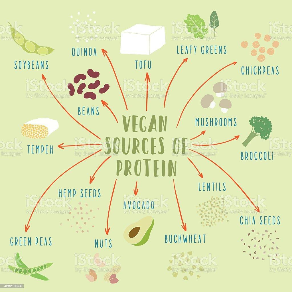 Vegan plant-based sources of protein vector art illustration