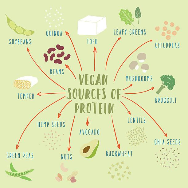 Vegan plant-based sources of protein Vegan plant-based sources of protein. Vector hand drawn illustration temps stock illustrations