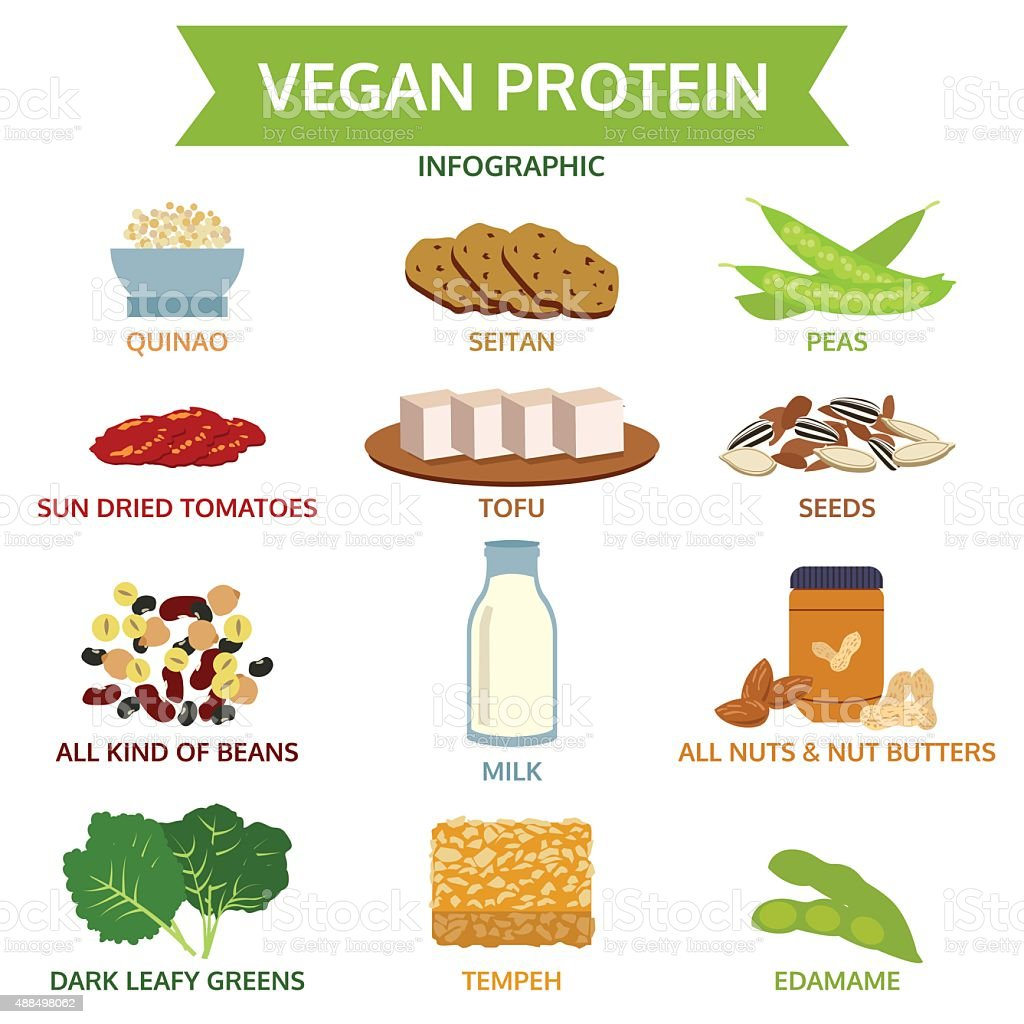 vegan protein info graphic, icon food vector illustration vector art illustration