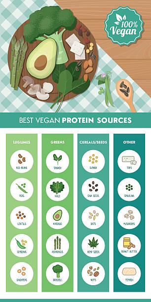 illustrations, cliparts, dessins animés et icônes de végétalien sources de protéines - antioxydant