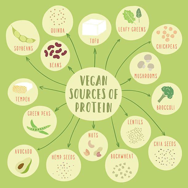 Vegan sources of protein Vegan sources of protein. Vector hand drawn illustration temps stock illustrations