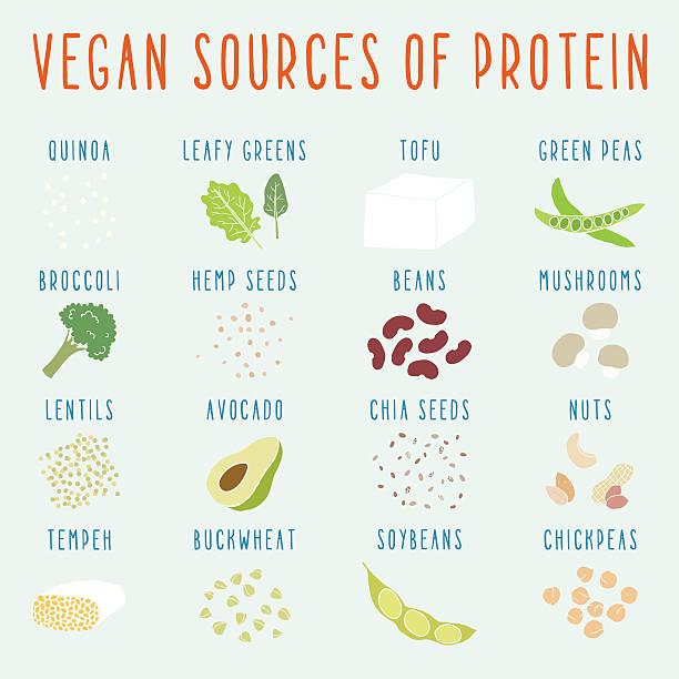 Vegan sources of protein. Vegan sources of protein. Vector EPS 10 hand drawn illustration temps stock illustrations