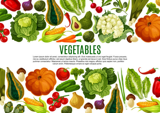 Vegetable and mushroom border banner design Vegetable and mushroom banner of farm product. Tomato, carrot and pepper, cabbage, broccoli, onion, cucumber, corn, olives, pumpkin, avocado, leek and artichoke border for vegetarian menu design avocado borders stock illustrations