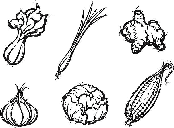 Vegetable and Spice Sketch Set of healthy food doodles, properly grouped, derived from my artwork. More Food and Beverage Series Lightbox scallion stock illustrations