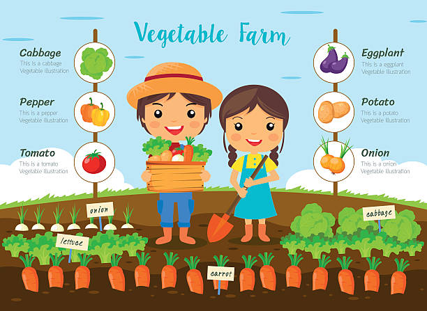 Vegetable farm infographic - ilustración de arte vectorial