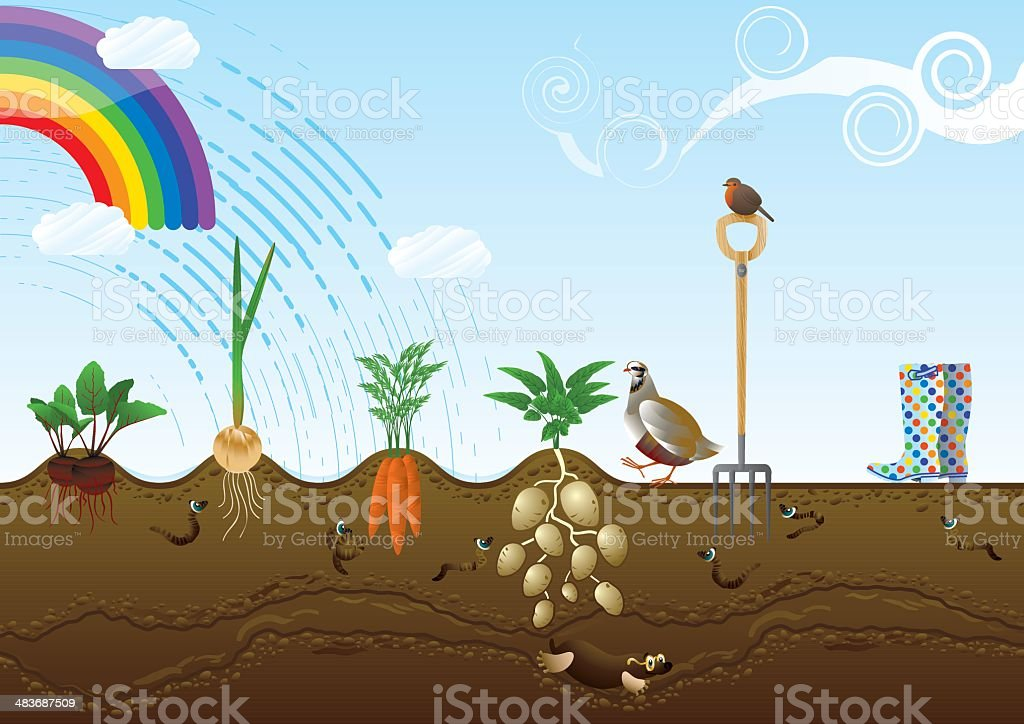 Vegetable Garden Allotment Landscape royalty-free stock vector art