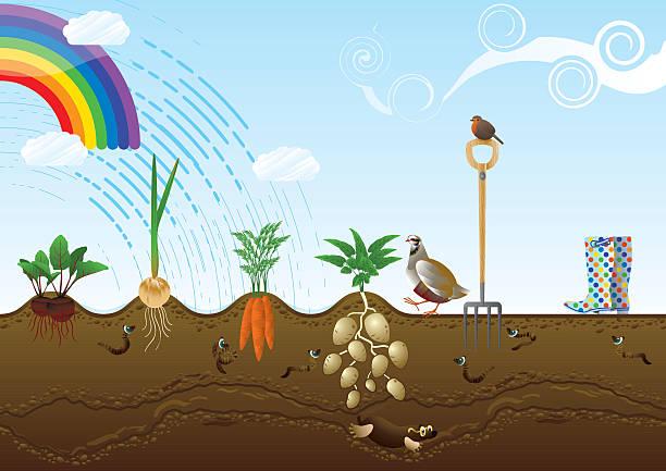 野菜畑割当の風景 ベクターアートイラスト