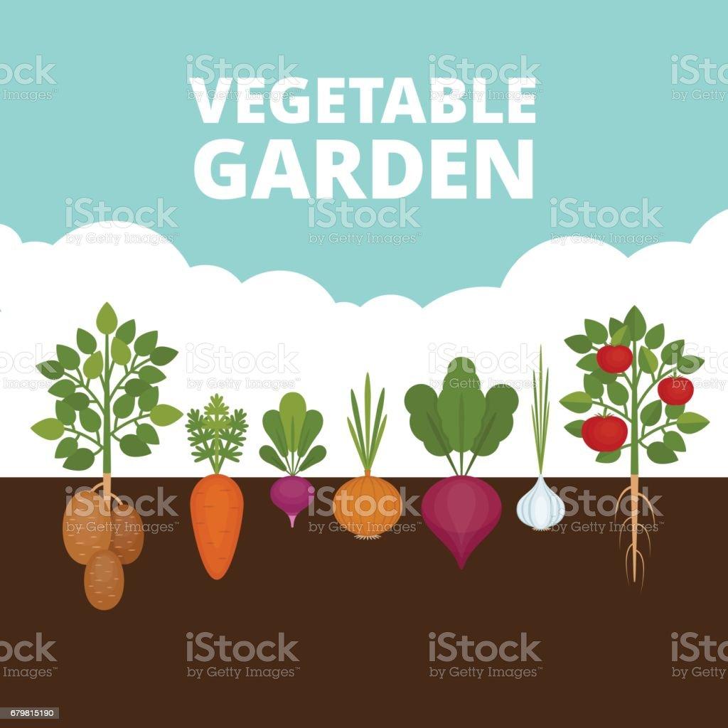 royalty free vegetable garden clip art vector images rh istockphoto com garden clip art free download garden clip art pictures