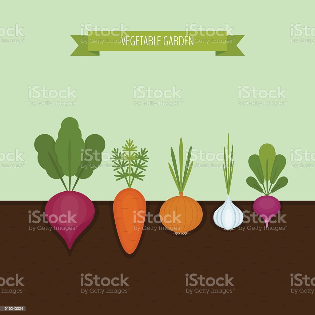 Vegetable garden banner. Organic and healthy food. – Vektorgrafik
