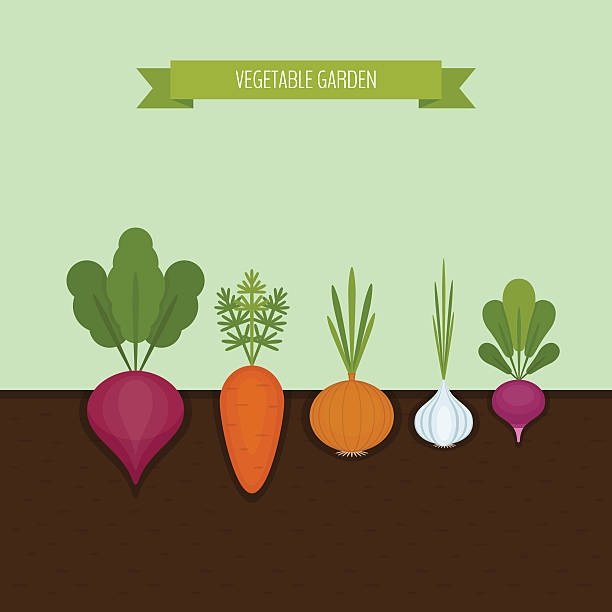 Vegetable garden banner. Organic and healthy food. - ilustración de arte vectorial
