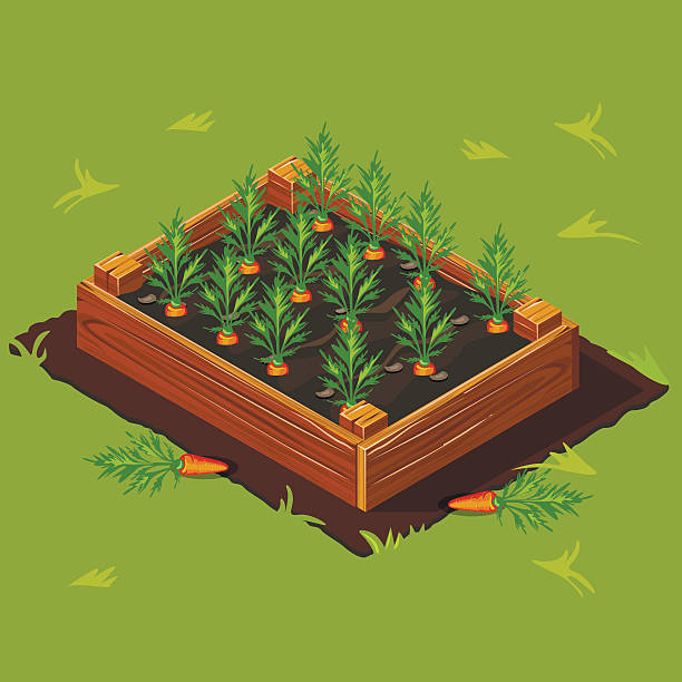 Vegetable Garden Box with Carrots. Set 1 Vegetable Garden Wooden Box with Carrots. Set 1 urban gardening stock illustrations