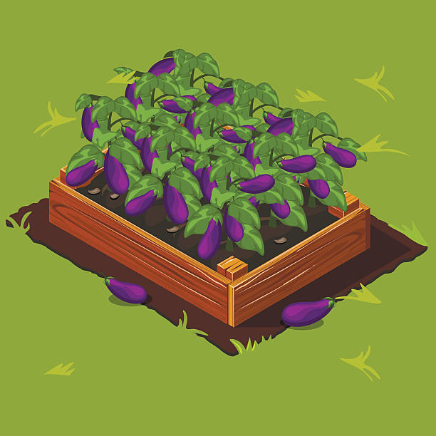 Royalty Free Raised Bed Garden Clip Art, Vector Images ...