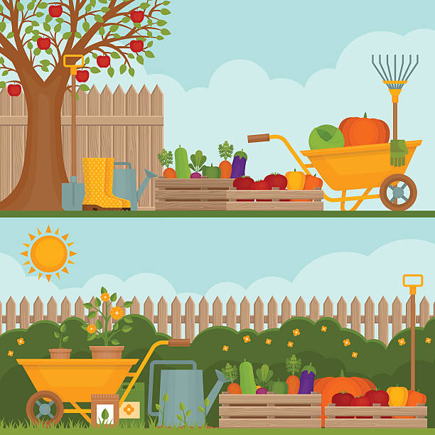 illustrations, cliparts, dessins animés et icônes de vegetable garden. concept of gardening. - potager