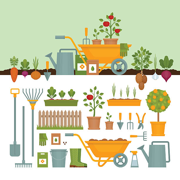 ilustraciones, imágenes clip art, dibujos animados e iconos de stock de vegetable garden. garden tools. banner with vegetable garden. - jardinería