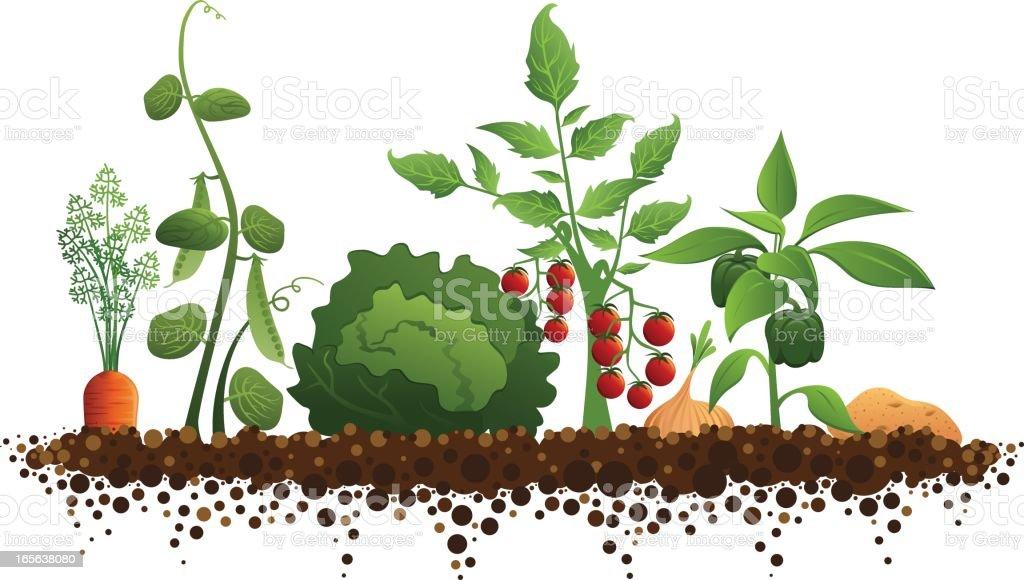 Vegetable Garden - Royalty-free Carrot stock vector