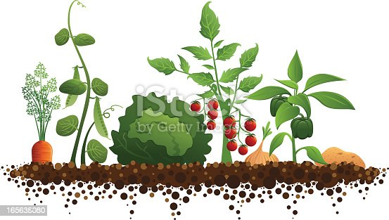 Vegetable Garden (carrots, peas, lettuce, tomatoes, onions, peppers, and a potato growing in soil)