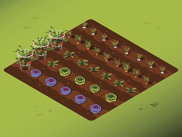 ilustrações, clipart, desenhos animados e ícones de horta - horta