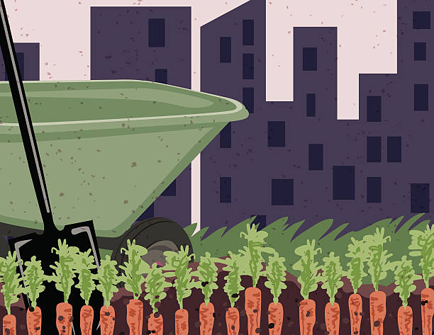 Vegetable Garden With Gren Wheelbarrow And Shovel Green wheelbarrow and shovel digging carrots in vegetable garden. Healthy living concept or grow your own foo. There is a city silhouette in the distance behind and grass beyond the wheelbarrow. urban gardening stock illustrations