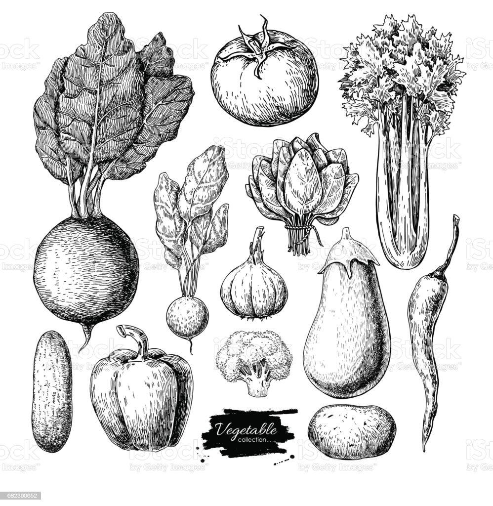 Vegetable hand drawn vector set. Isolated vegatarian engraved st vector art illustration