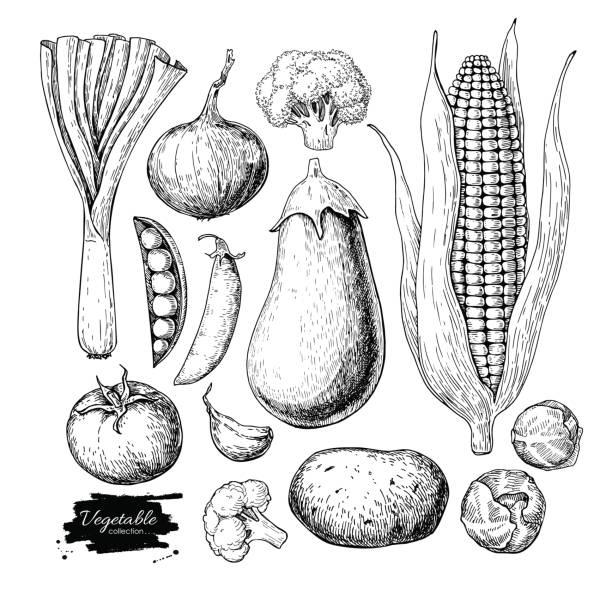 stockillustraties, clipart, cartoons en iconen met plantaardige hand getrokken vector set. geïsoleerde vegetarisch gegraveerd st - spruitjes