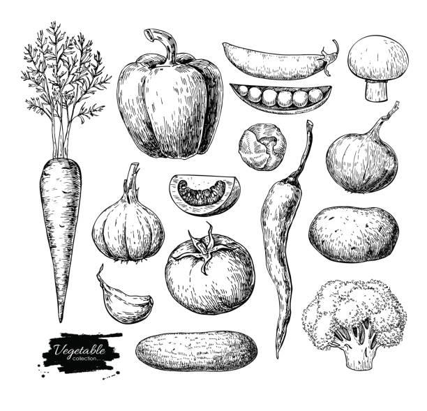 vegetable hand drawn vector set. isolated vegatarian engraved st - tomato stock illustrations