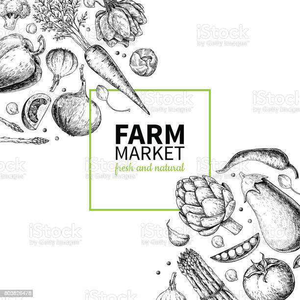 Vegetable hand drawn vintage vector frame illustration farm market vector id803826478?b=1&k=6&m=803826478&s=612x612&h=0fbimdiflpk ms9yb5ebtw yzhslucnetgwtk jhib8=