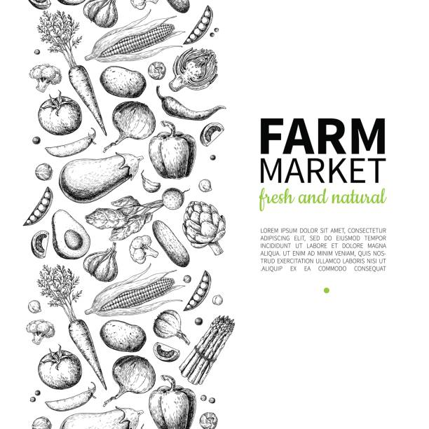 vegetable hand drawn vintage vector frame illustration. farm market poster. vegetarian set of organic products. - lettuce stock illustrations