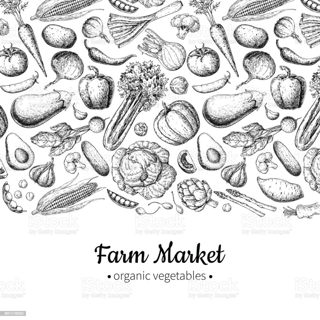 Vegetable hand drawn vintage vector illustration. Farm Market poster. vector art illustration