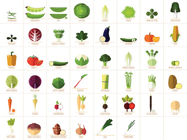 vegetable icons - lettuce stock illustrations