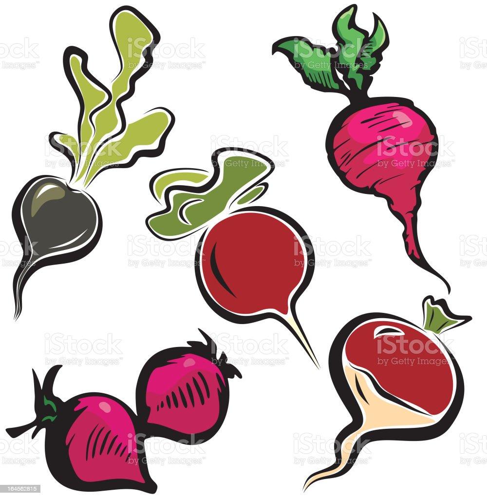 Vegetable Illustrations XI: Radishes (Vector) royalty-free stock vector art