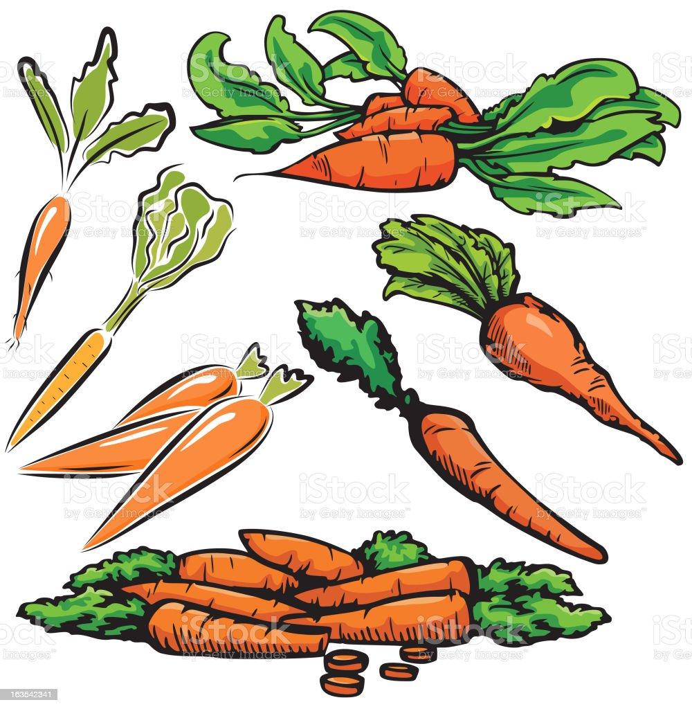 Vegetable Illustrations XII: Carrots (Vector) royalty-free stock vector art
