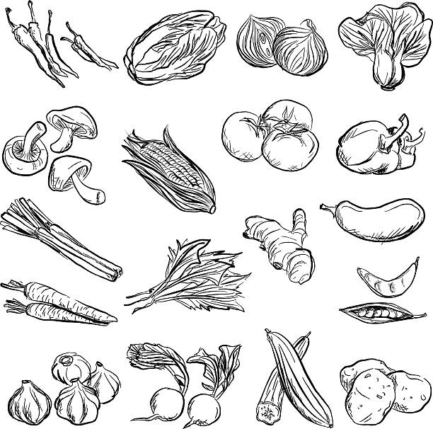 Vegetable in charcoal sketch style Vegetable in charcoal sketch style radish stock illustrations