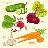 Set of vegetables mix vector isolated. Healthy eat. Garlic, cucumber, carrot and other vegetables. Natural organic food. Ingredients for a vegetarian meal.
