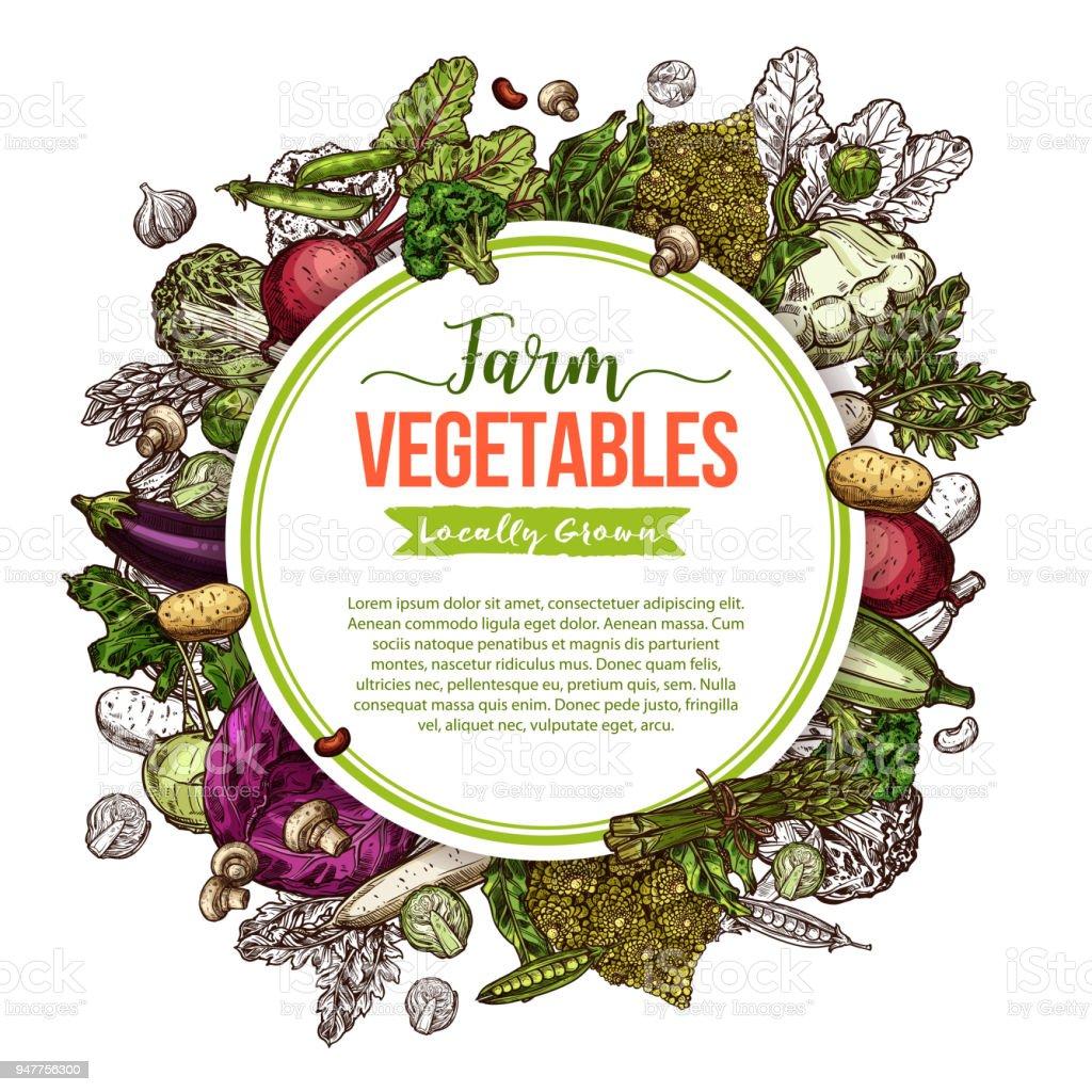 Gemüse Pilze Und Bohnen Skizzieren Rahmen Plakat Stock Vektor Art ...