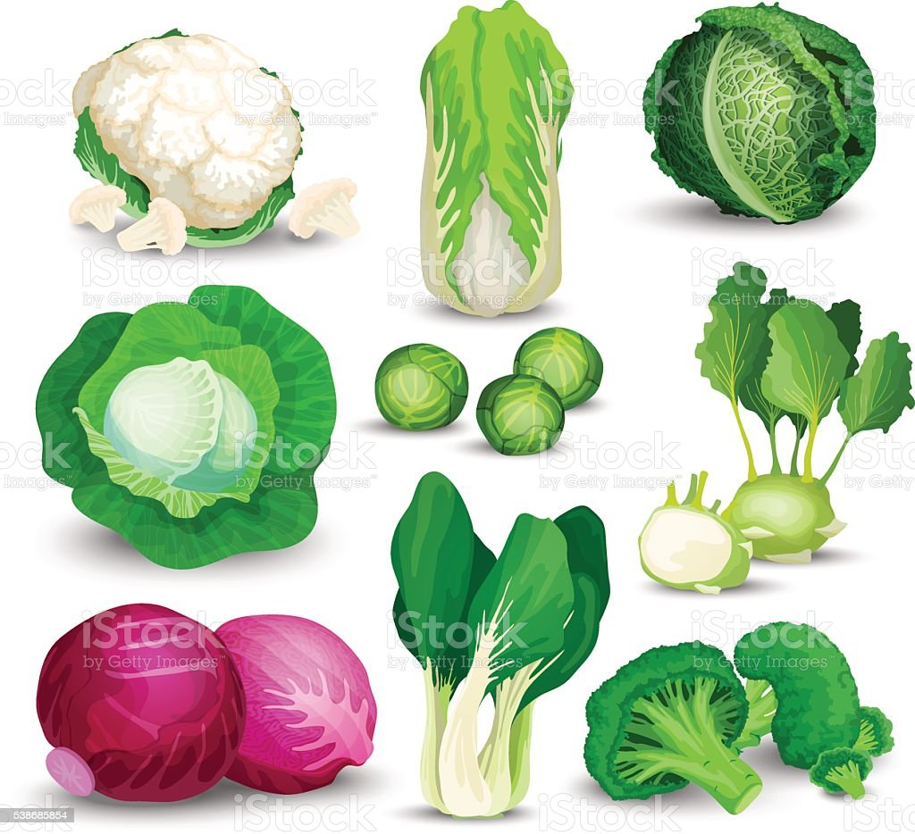 Vegetable set with cabbages vector art illustration