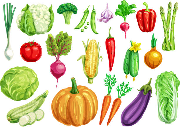 vegetable watercolor set for healthy food design - vegetable stock illustrations, clip art, cartoons, & icons