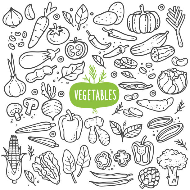 Vegetables Black and White Illustration. Vegetables doodle drawing collection. vegetable such as carrot, corn, ginger, mushroom, cucumber, cabbage, potato, etc. Hand drawn vector doodle illustrations in black isolated over white background. cooking drawings stock illustrations