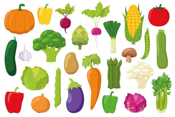 illustrazioni stock, clip art, cartoni animati e icone di tendenza di vegetables collection: set of 26 different vegetables in cartoon style vector illustration - aglio cipolla isolated