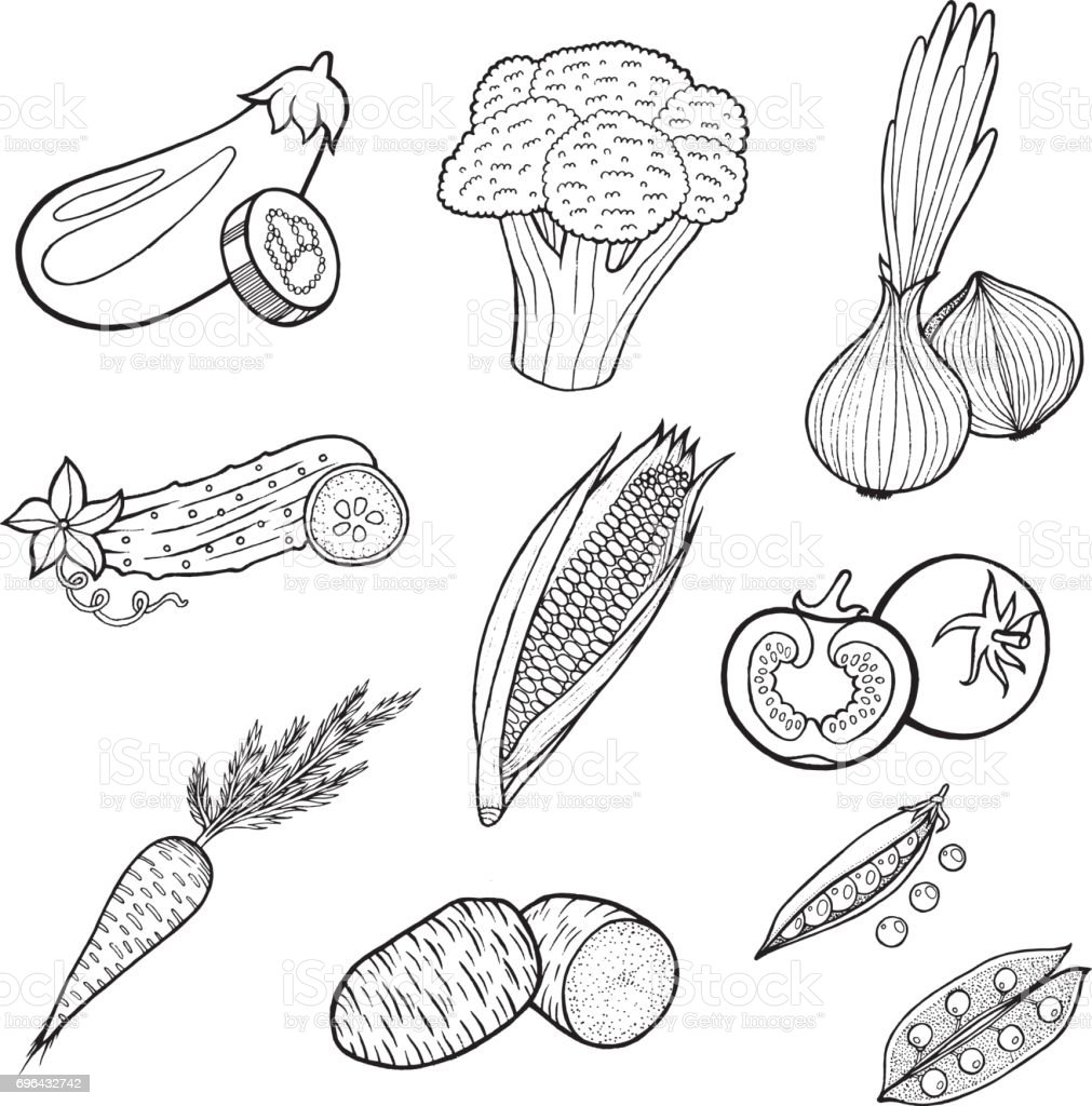 Vegetables food collection - pages of coloring book for adult and children. Vector hand drawn black and white art set for textile, print, poster, design. vector art illustration