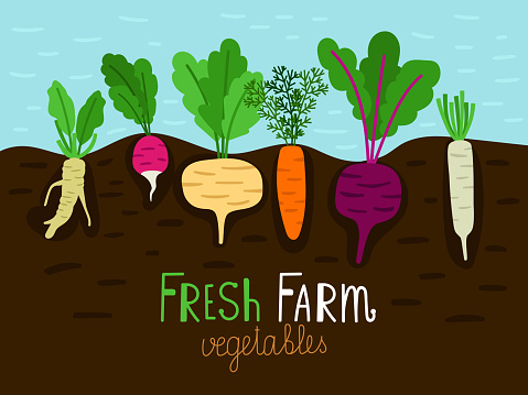 Vegetables garden growing