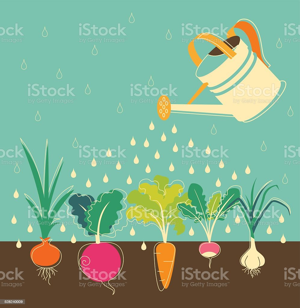 Vegetables garden watering vector art illustration