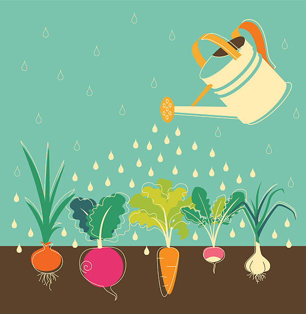 Best Vegetable Garden Illustrations, Royalty-Free Vector