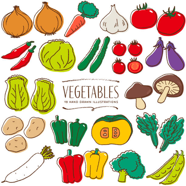 vegetables hand drawn color illustration - cherry tomato stock illustrations