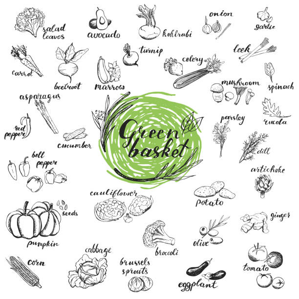 Vegetables hand drawn sketches. Organic vegetables for menu design isolated on white background. Green basket healthy food collection. squash vegetable stock illustrations